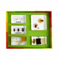 생태성장모형-꿀벌