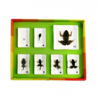 생태성장모형-개구리