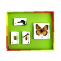 생태성장모형-나비