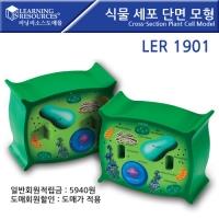 식물 세포 단면모형/LER1901 [러닝리소스]