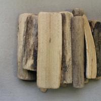 부드러운반토막나무_12p