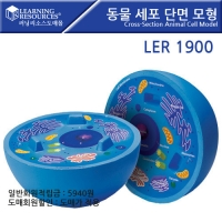 동물세포 단면 모형/LER1900 [러닝리소스]